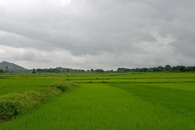 Farmers work in the fields growing rice and other crops near Jaleripentho village.   Gram Vikas' founders came to Orissa in the early 1970s as student volunteers to serve victims of a devastating cyclone. Their extensive activism and relief work motivated them to form Gram Vikas, which was registered on January 22, 1979, and currently serves more than 3,89,333 people in 1196 habitations of 25 districts in Odisha. Through its direct outreach programmes Gram Vikas works in 943 villages across 23 districts covering 59,132 families of which 39% are adivasis, 14% are dalits and the remainder are from general castes, mostly poor and marginal farmers.