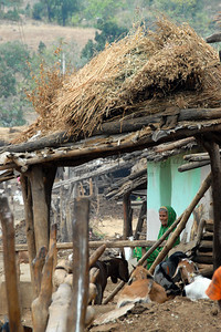 India: A lady sitting with her goats near her home in a village near Nagpur, Maharashtra. Jan 2007.