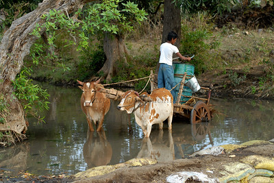 India: Liquid of life: Water is a vital life-line for humans. Living in rural India getting potable water can be difficult. Seen here, the villagers use sand bags to block a stream and fill water to be taken on bullock carts to the village about 5 Kms away. Jan 2007.