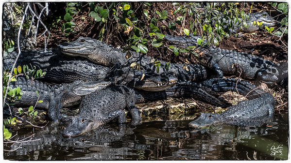 Pile-up on the trail in the Everglades