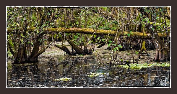 The Corkscrew swamp