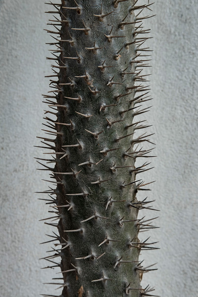 Sayulita_Mexico_012