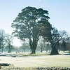 """Images capured in the early morning fog on a frosty mornng at Royal Wellington Golf Club, Heretaunga, Wellington, New Zealand on Sunday, 16 July 2017. Copyright: John Mathews 2017.   <a href=""""http://www.megasportmedia.co.nz"""">http://www.megasportmedia.co.nz</a>"""
