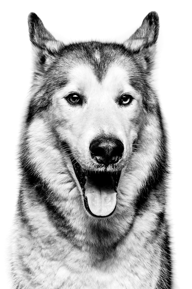 Loki, Wolfdog, The North Face