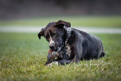 TGBB_Dog_Photography_Alurkoff-0040