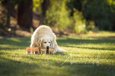 TGBB_Dog_Photography_Alurkoff-0016