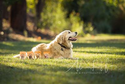 TGBB_Dog_Photography_Alurkoff-0017