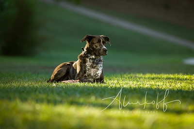 TGBB_Dog_Photography_Alurkoff-0029