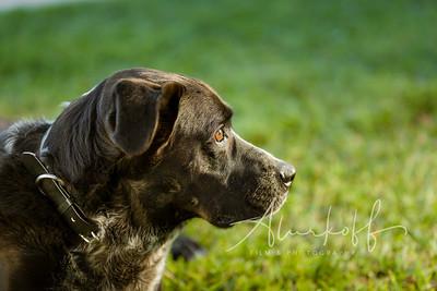 TGBB_Dog_Photography_Alurkoff-0036