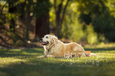 TGBB_Dog_Photography_Alurkoff-0018