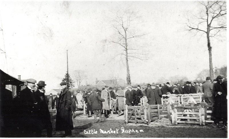 11-Cattle Market  CP