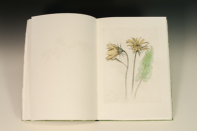 Sarha Horowitz_Wildflowers-9130