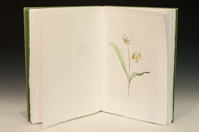 Sarha Horowitz_Wildflowers-9049