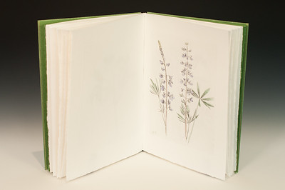 Sarha Horowitz_Wildflowers-9072