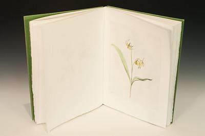 Sarha Horowitz_Wildflowers-9055