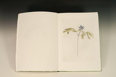 Sarha Horowitz_Wildflowers-9124