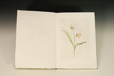 Sarha Horowitz_Wildflowers-9117