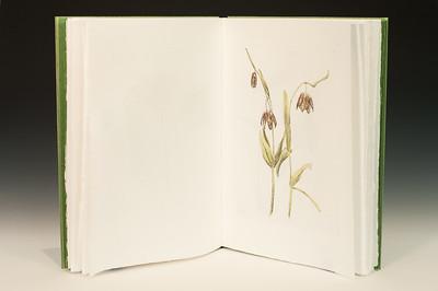 Sarha Horowitz_Wildflowers-9063