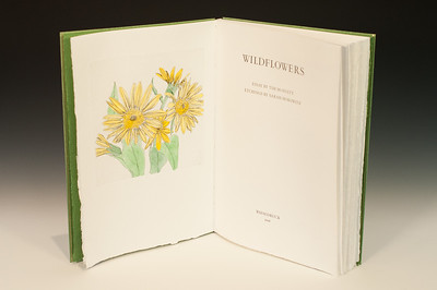 Sarha Horowitz_Wildflowers-9027