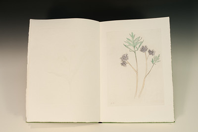 Sarha Horowitz_Wildflowers-9118