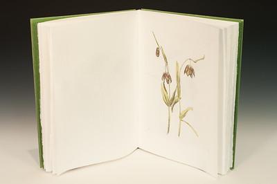 Sarha Horowitz_Wildflowers-9060