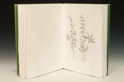 Sarha Horowitz_Wildflowers-9075