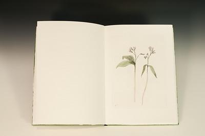 Sarha Horowitz_Wildflowers-9111