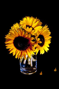 Sunflower - My first Studio setup