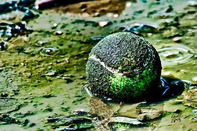 The lost Tennis Ball :(