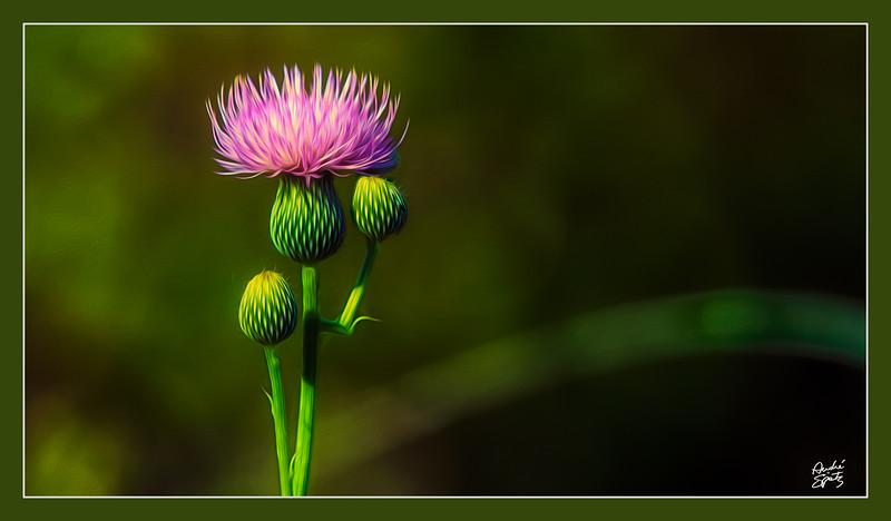 Blooming Beauty Queen