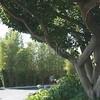 Misting Tree Detail