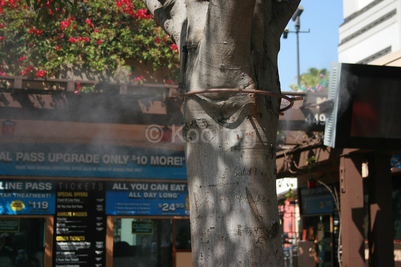 Misting Ring Affixed to Tree