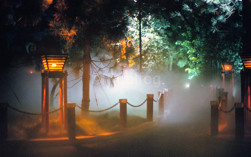 Pathway Accented by Fog