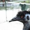 D3S_8196 EMU