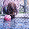 D3S_8134 bear