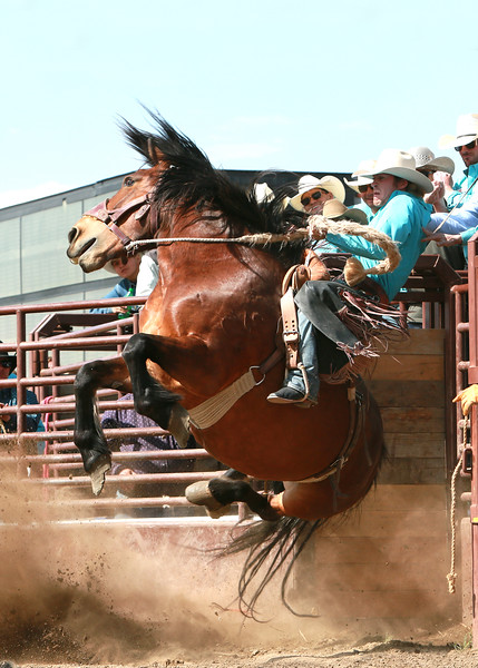 Andy Clary on Bailey Pro Rodeo Horse