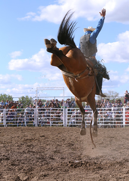 2017 MIles City Bucking Horse Sale