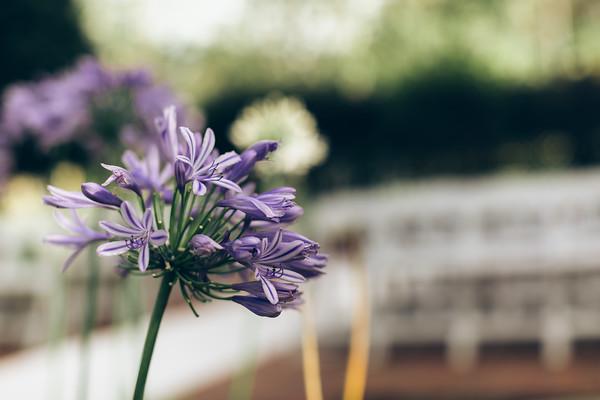 0013_Woodford_Gardens