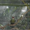 Bird Cage Up Close