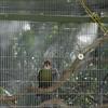 Bird Cage Up Close