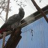 Parrot Enjoying Mist