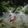 Flamingos in Cool Environment
