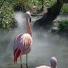 Flamingo Up Close