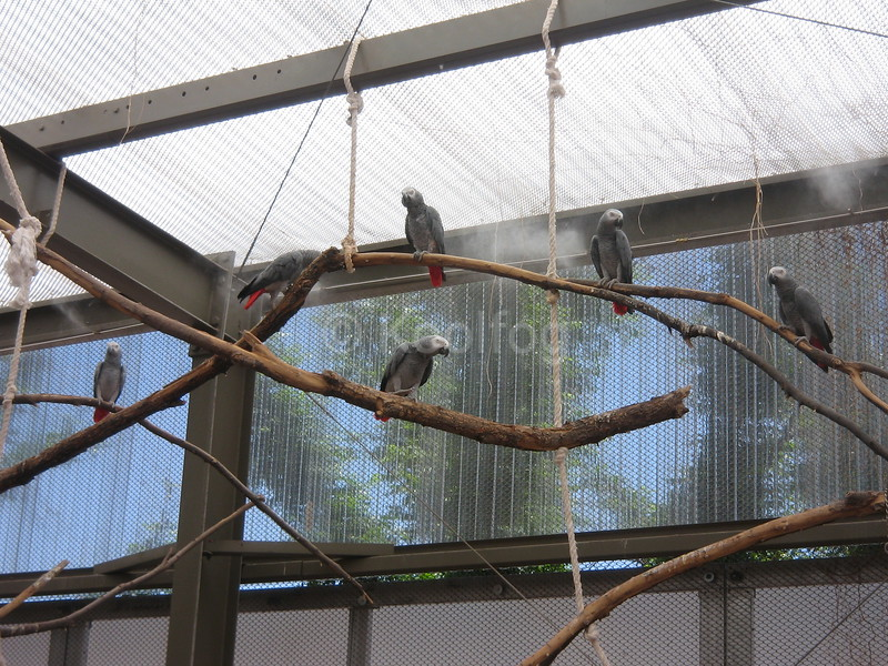 Parrots in Misted Cage