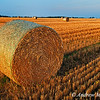 Barley bales near Thornton, Ontario, Canada