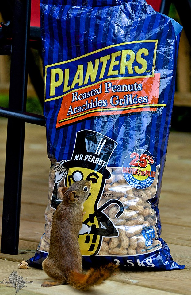 I LOVE Mr. Peanut