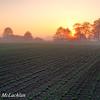 Soy Bean Crop at Sunrise, Thornton, Ontario, CAnada