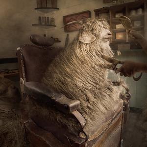 Sheep Hairy