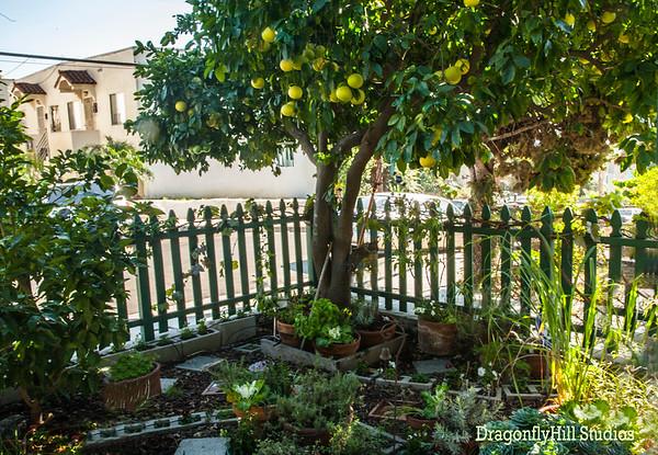 Gardens & Exterior