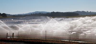 Irrigation_7187